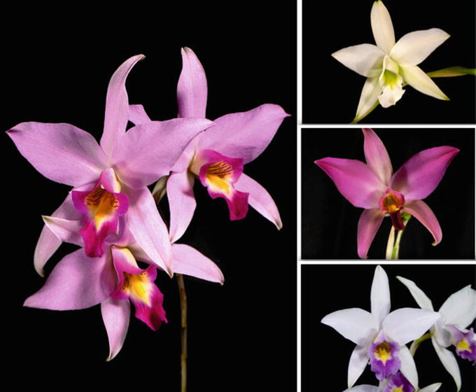 What Are Orchids? | SpringerLink