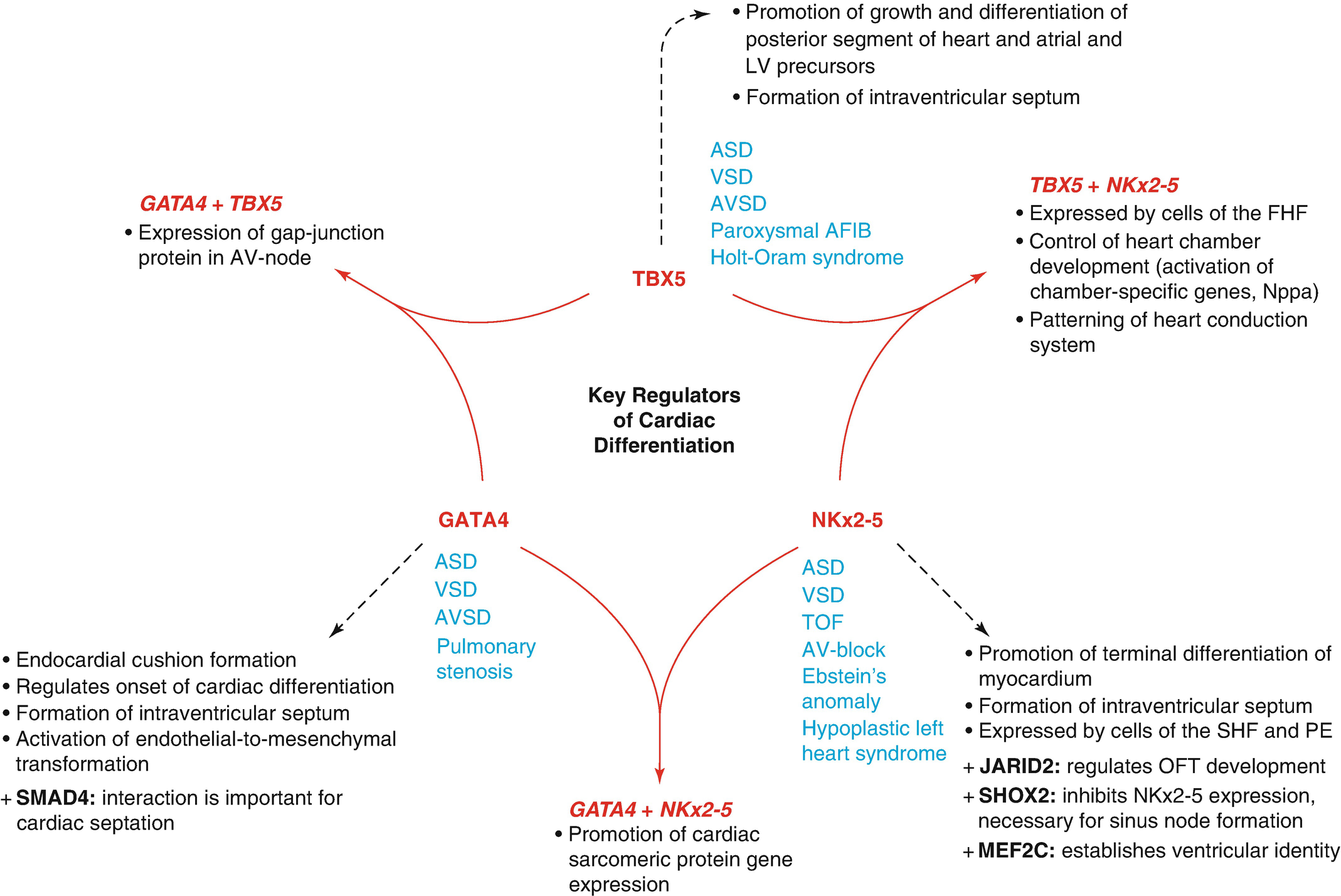 image about Vsd 190 Printable Form identified as Crucial within Genetic Etiology of Congenital Centre Illnesses