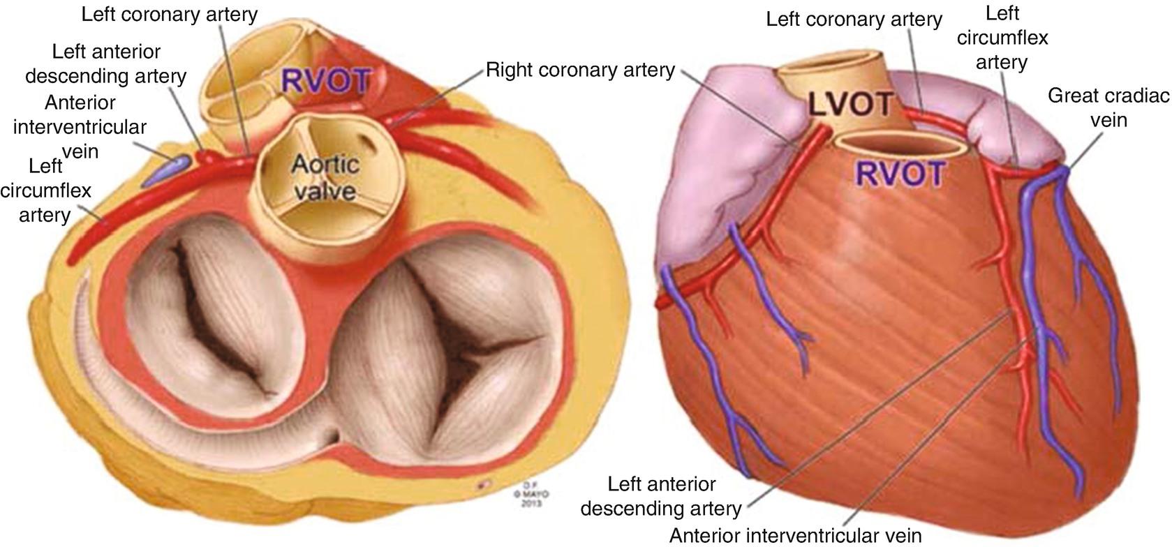 Right Heart Anatomy: A Short Uptodate | SpringerLink