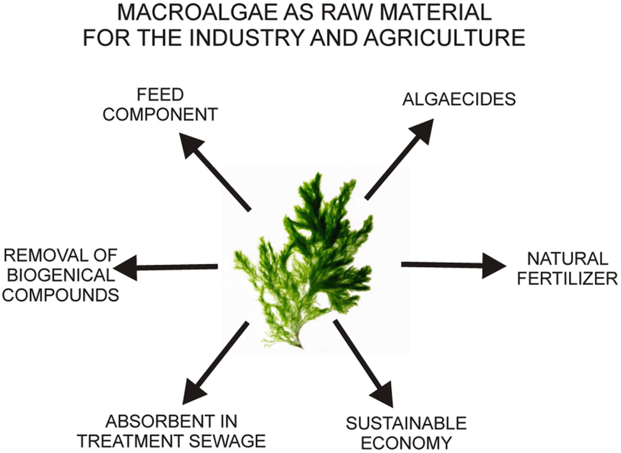 Biology of freshwater macroalgae and their distribution springerlink open image in new window fandeluxe