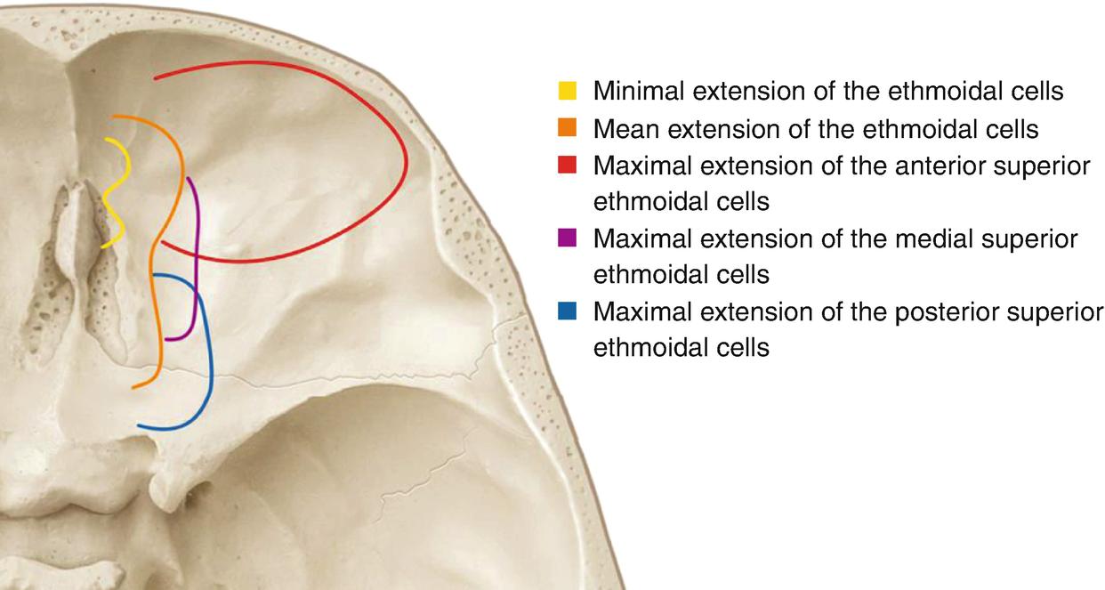 Anatomy and Topography of the Craniofacial Region | SpringerLink