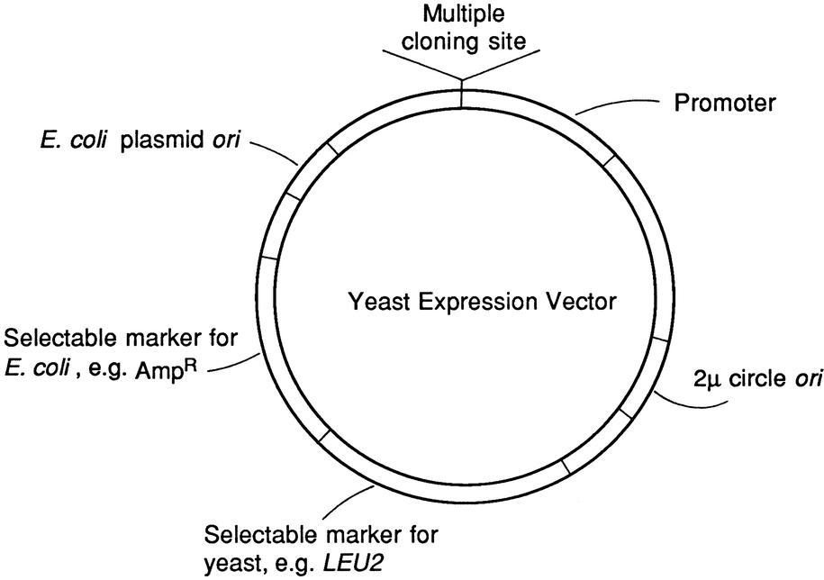 Cloning Vectors for Introducing Genes into Host Cells