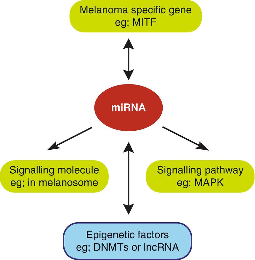 Epigenetics in Melanoma | SpringerLink