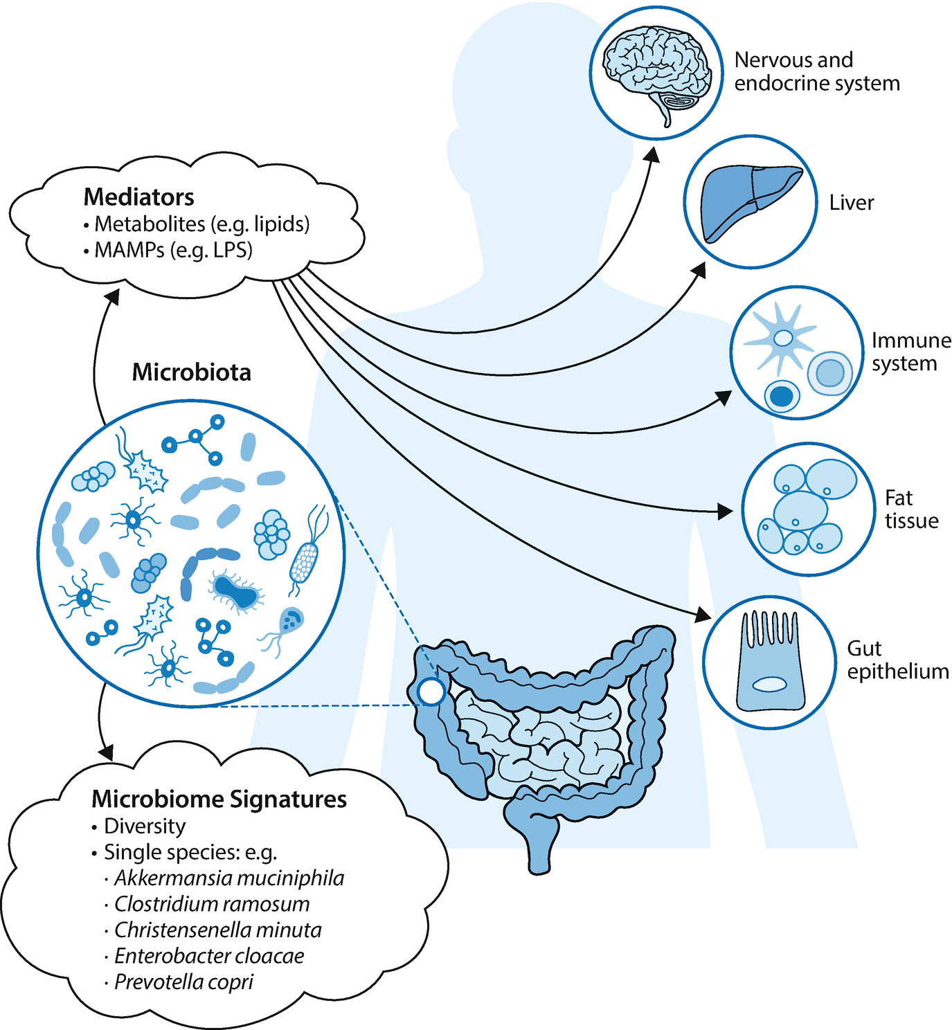 Microbiome and Diseases: Metabolic Disorders | SpringerLink