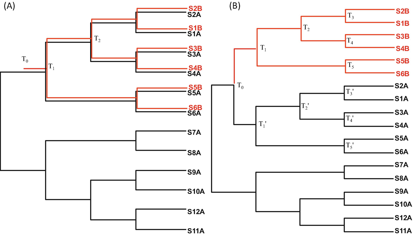 Distance based phylogenetic methods springerlink open image in new window fandeluxe Image collections
