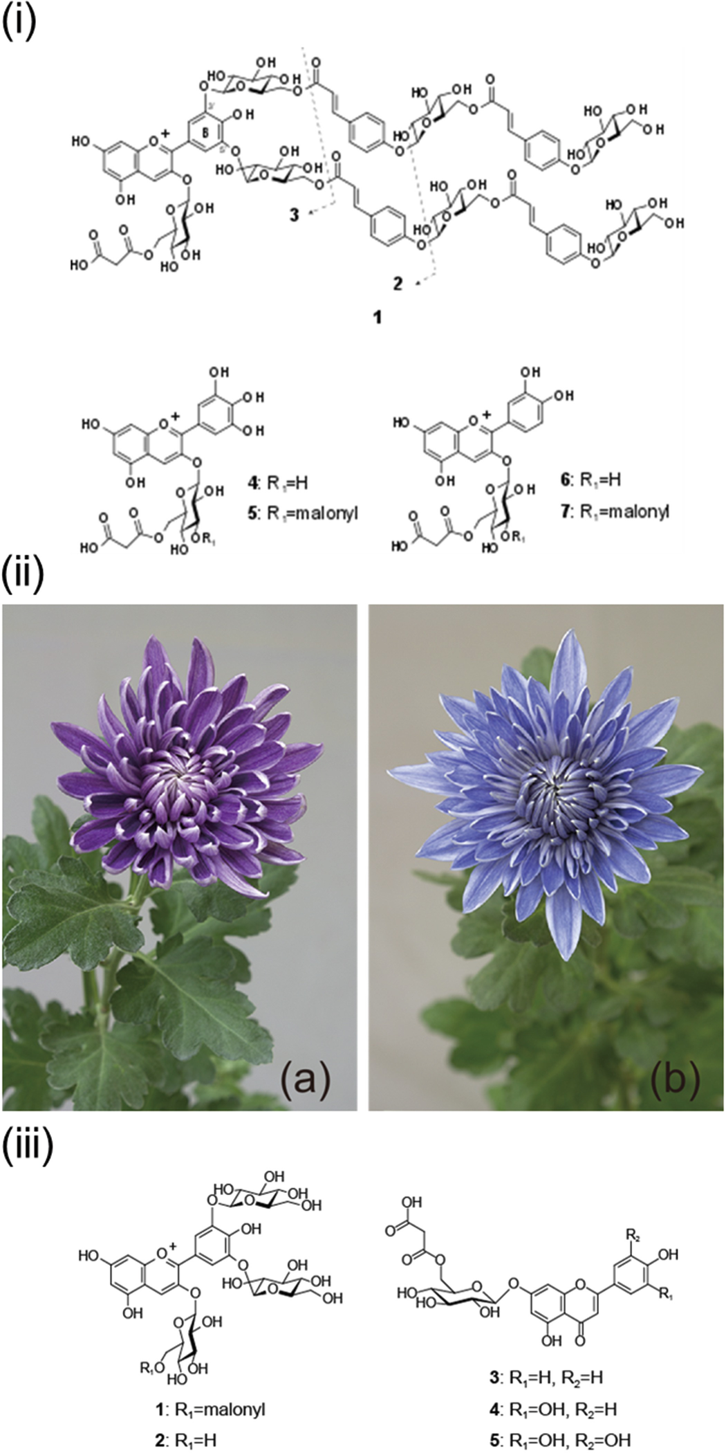 Flower Color and Its Engineering by Genetic Modification | SpringerLink