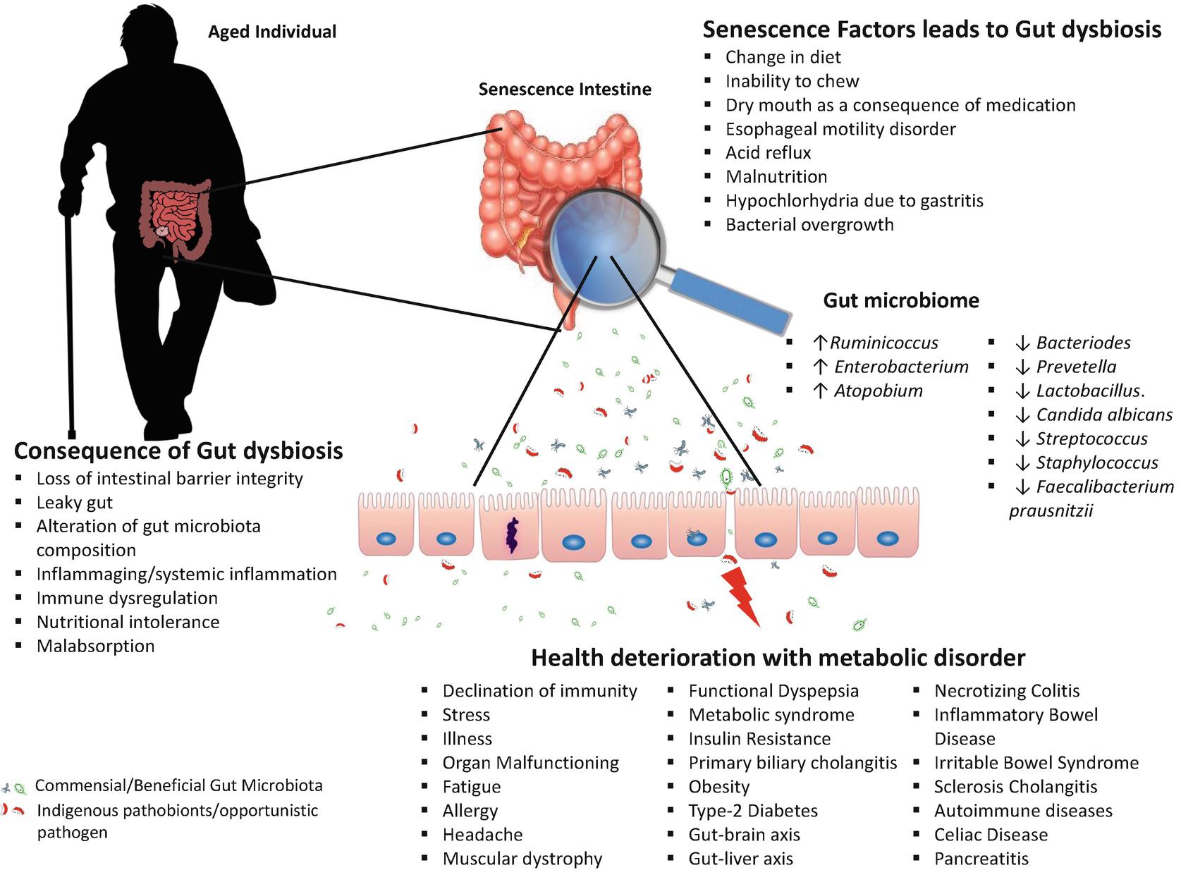 Dysbiosis brain fog - Mirica Autism Dysbiosis fatigue
