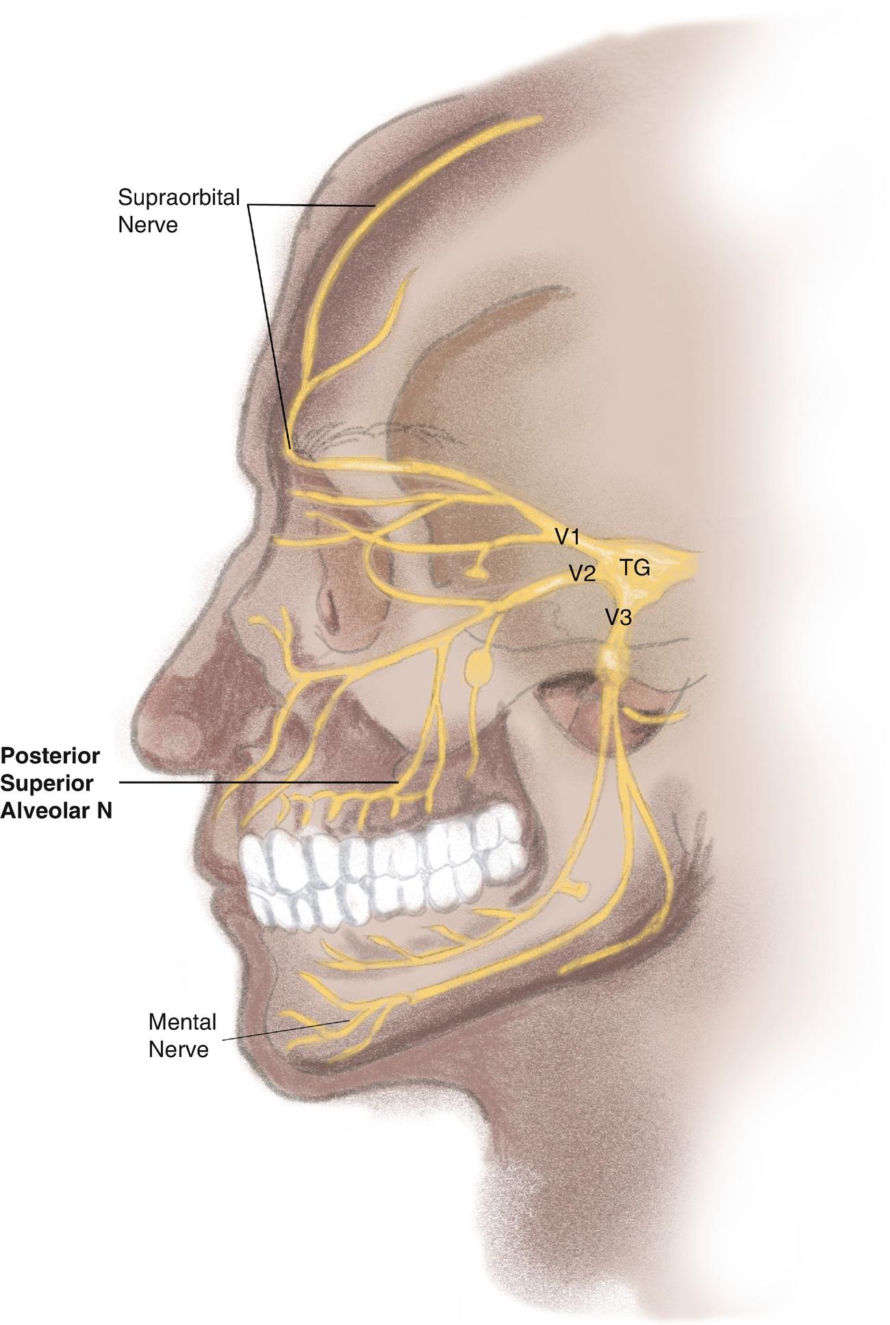 Diagnostic Nerve Blocks | SpringerLink