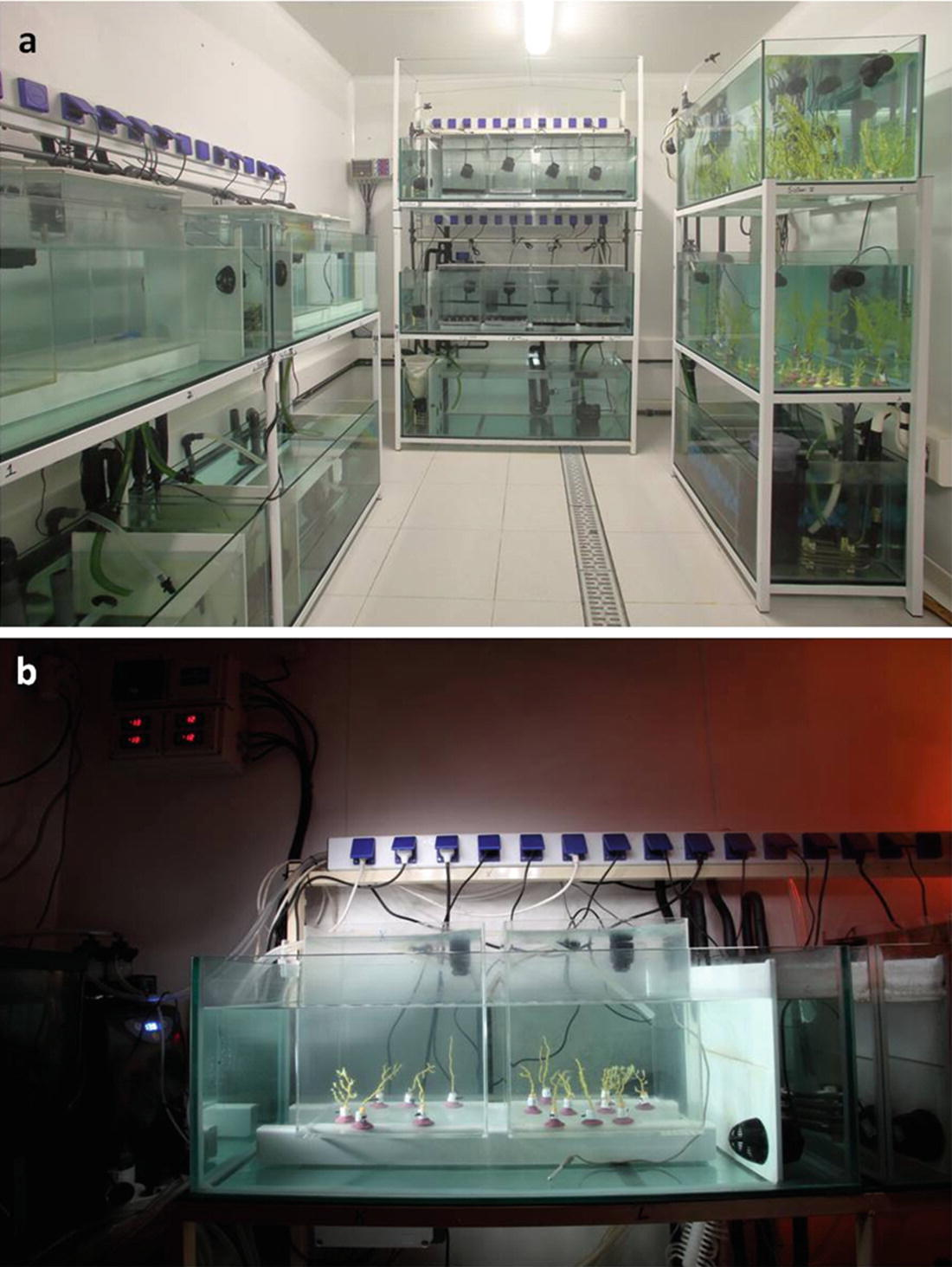 38 Cold-Water Coral in Aquaria: Advances and Challenges  A Focus on
