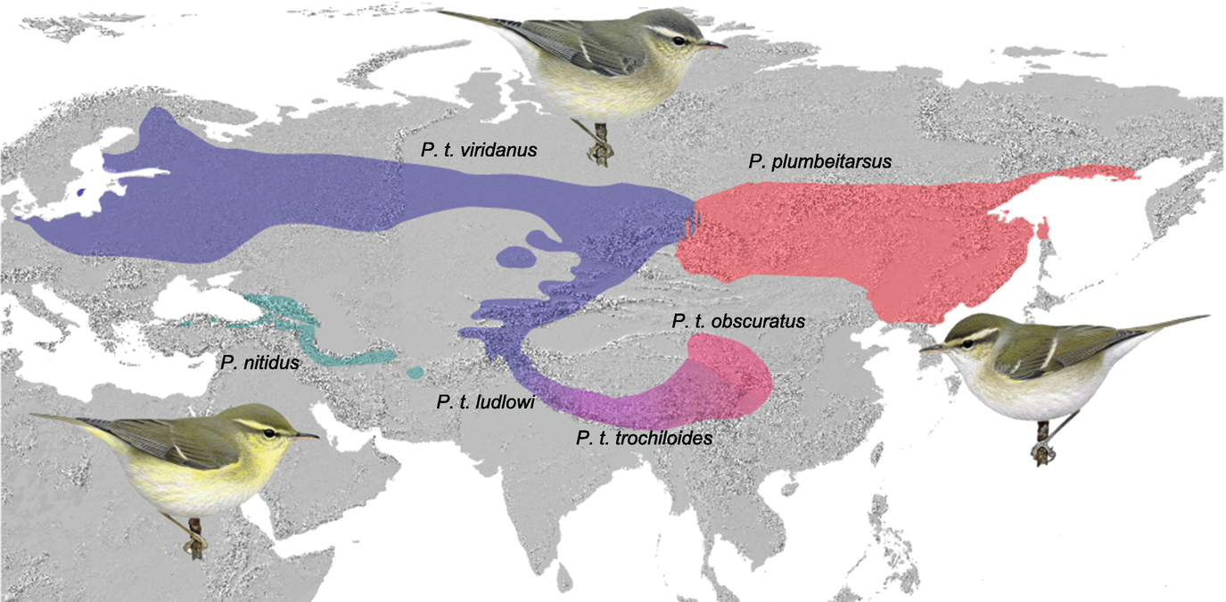 Avian Diversity and Distributions and Their Evolution