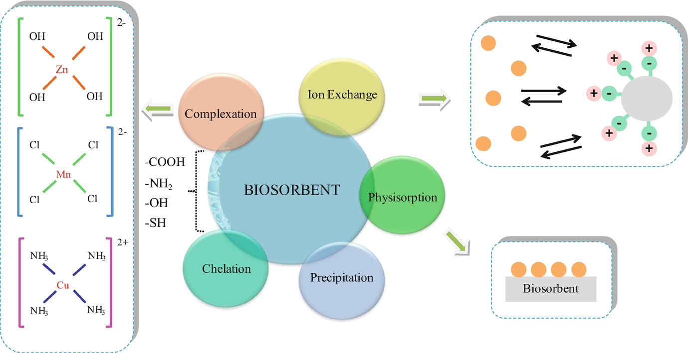 Biosorption of Metals and Metalloids | SpringerLink