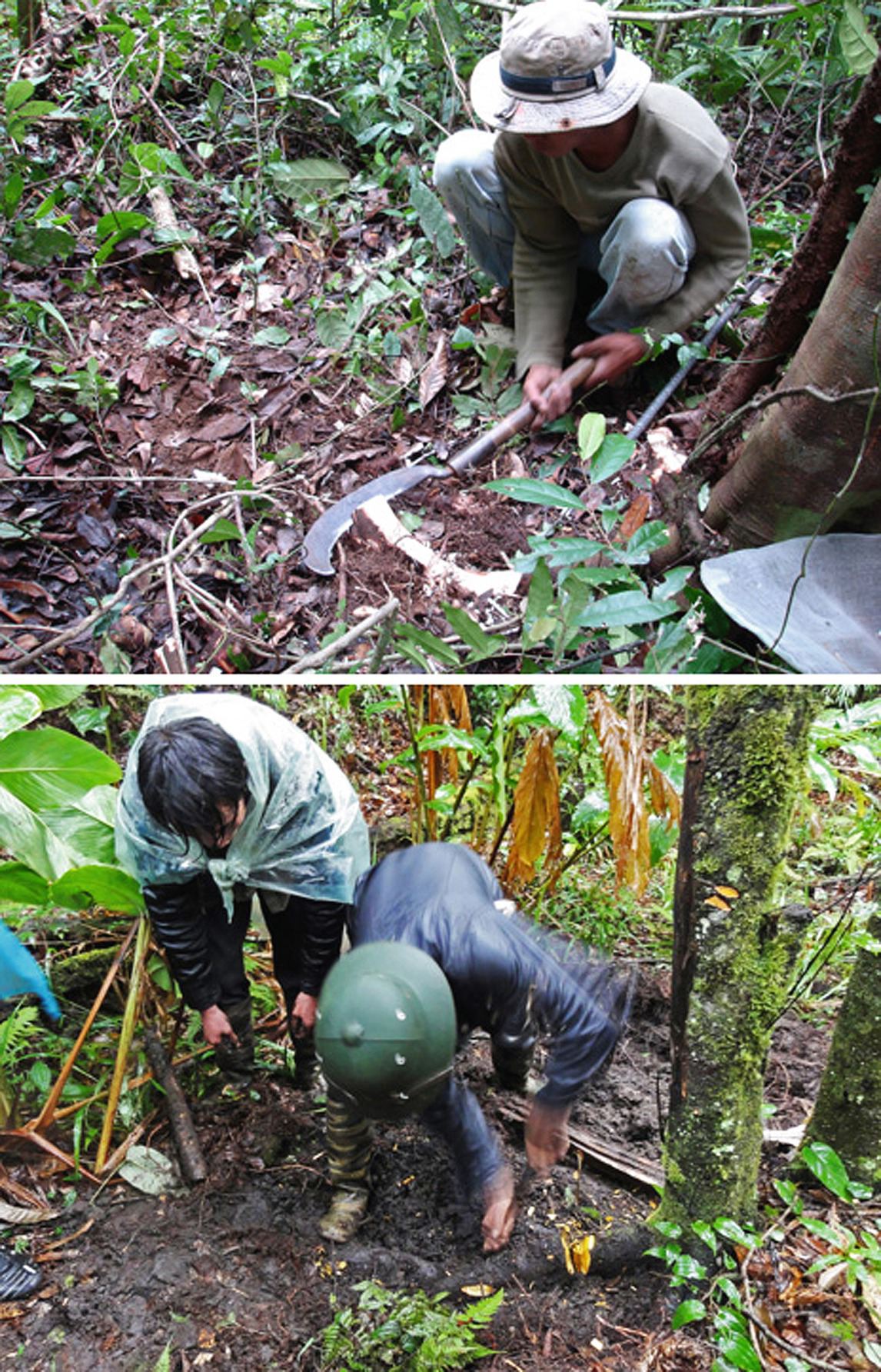 The Search for Anticancer Agents from Tropical Plants
