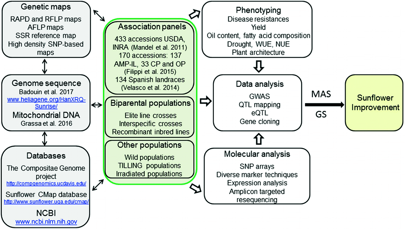 Sunflower and Climate Change: Possibilities of Adaptation