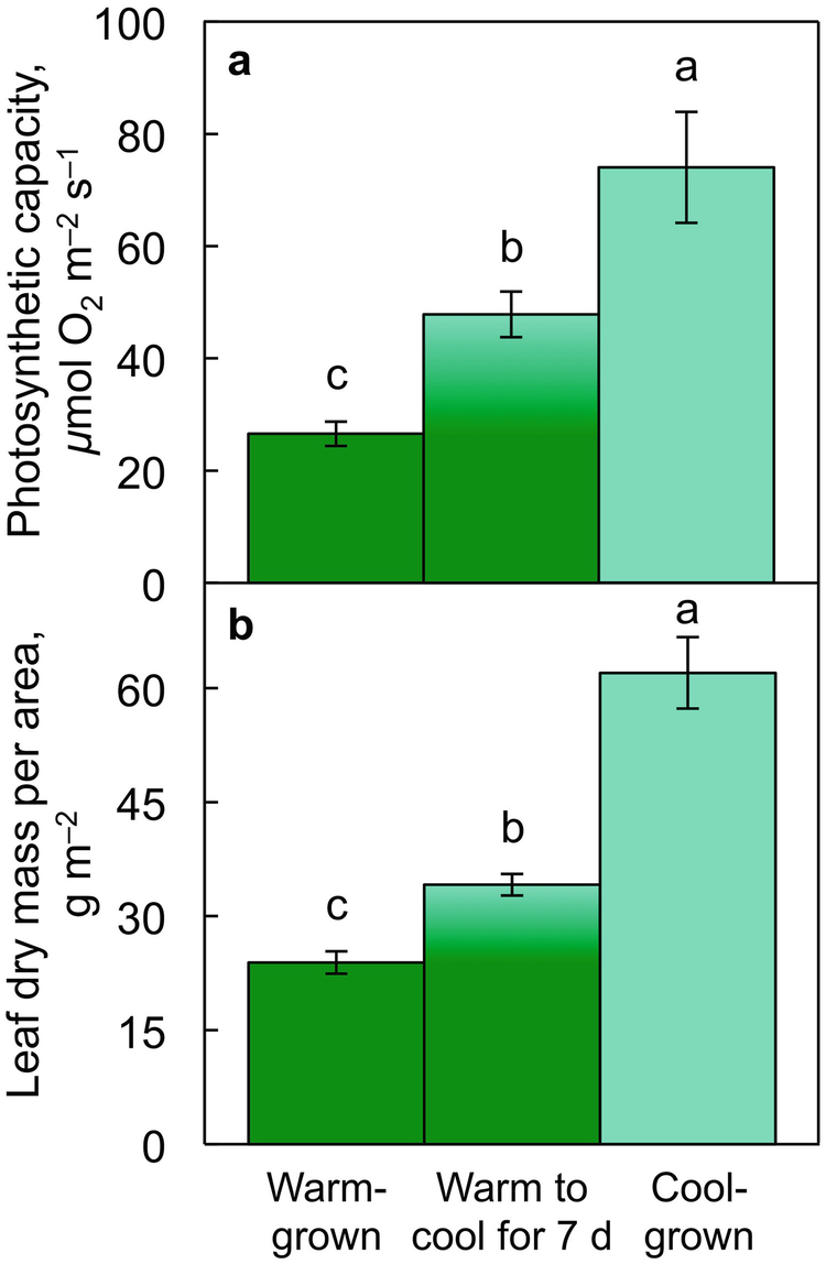 Photosynthetic Modulation in Response to Plant Activity and