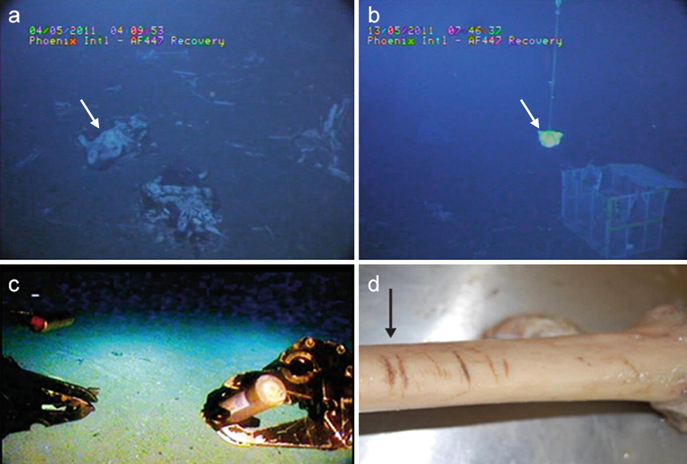 Human Remains In Marine Environments Challenges And Future Developments Springerlink