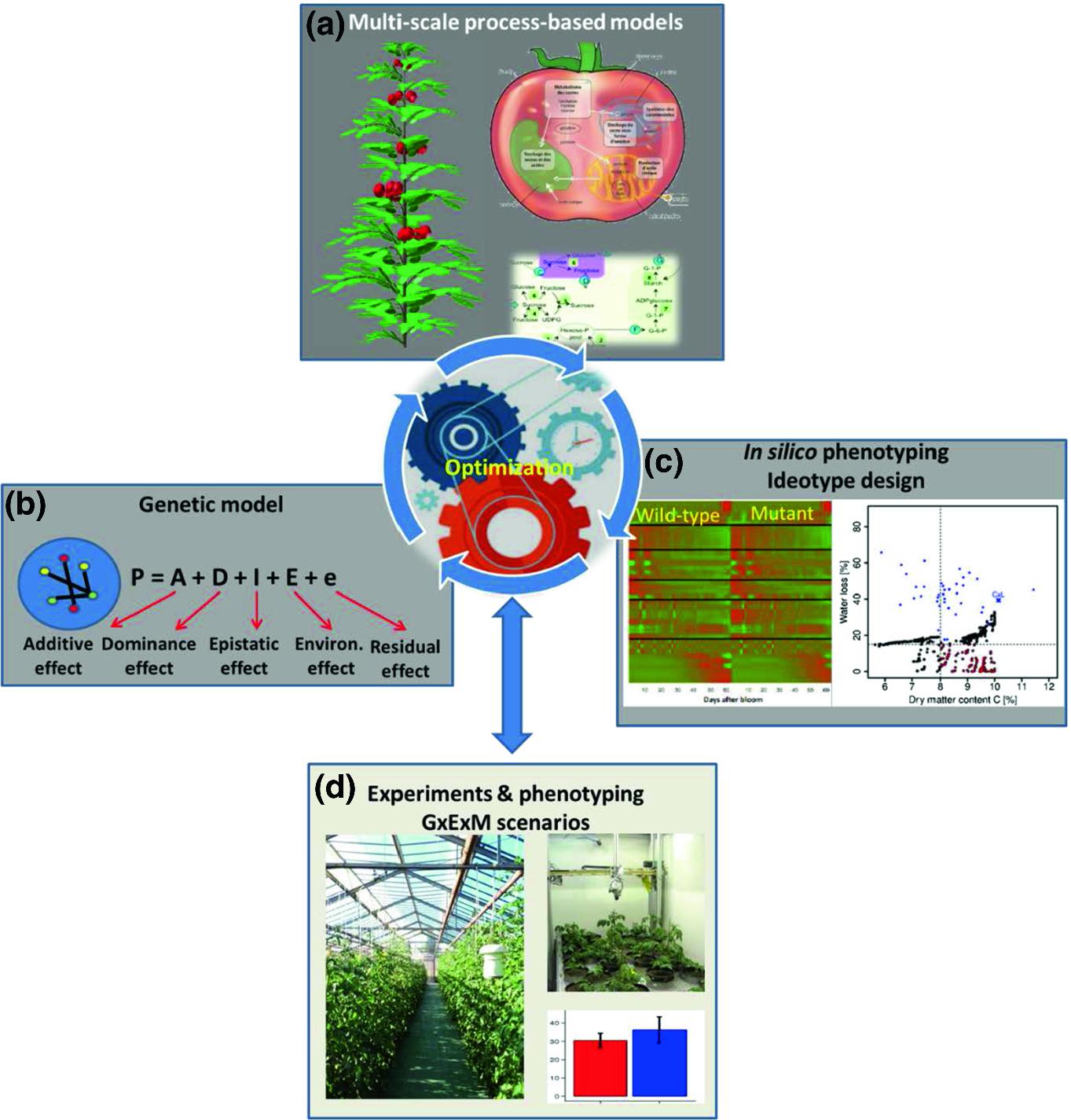Genomic Designing For Climate Smart Tomato