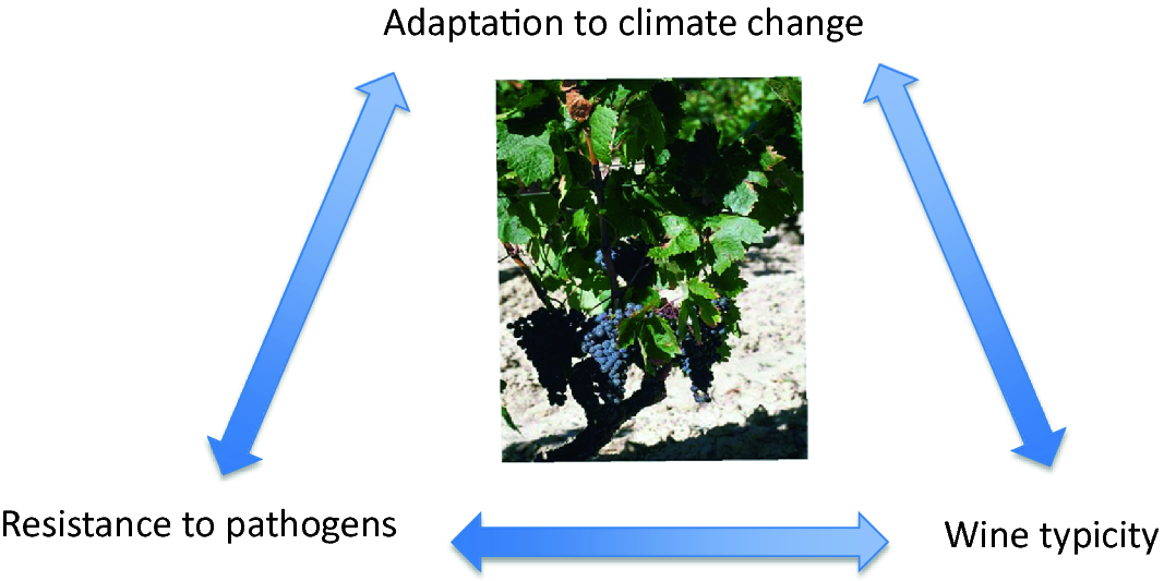 Genetic and Genomic Approaches for Adaptation of Grapevine to ...
