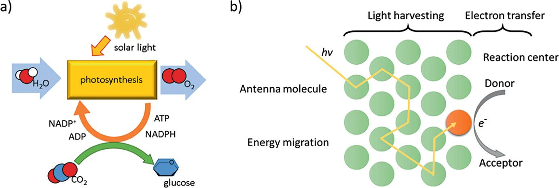 Aggregation-Induced Emitters in Light Harvesting | SpringerLink