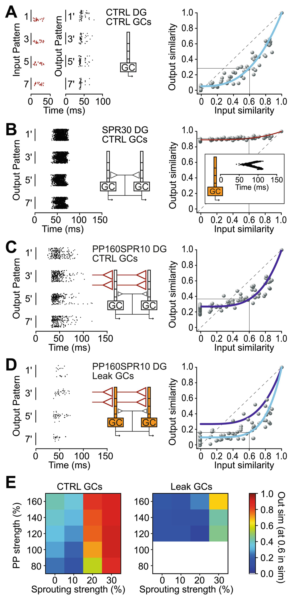 A Network Model Reveals That the Experimentally Observed Switch of