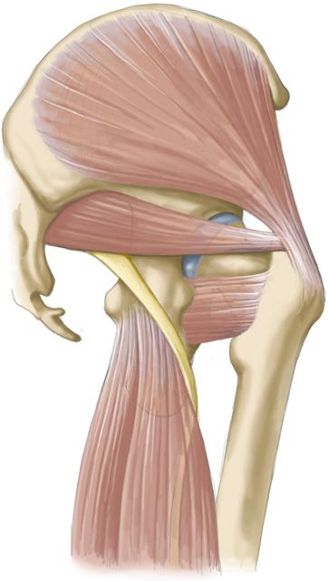 Sport- und Weichteilverletzungen | SpringerLink