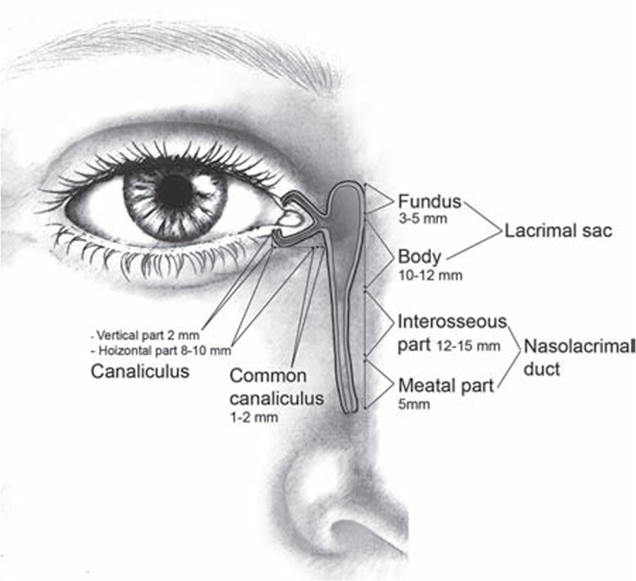 Clinicopathologic Features of Lesions Affecting the Lacrimal ...