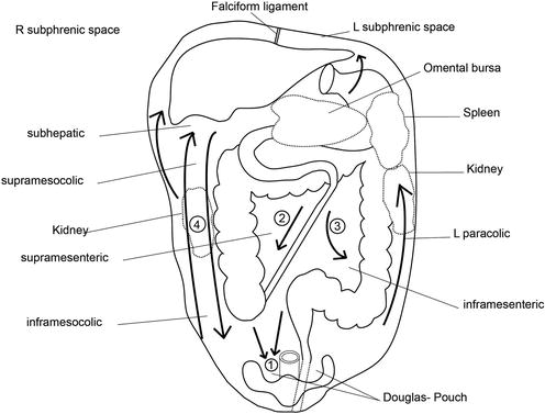 Mesentery, Omentum, Peritoneum: Embryology, Normal Anatomy and ...