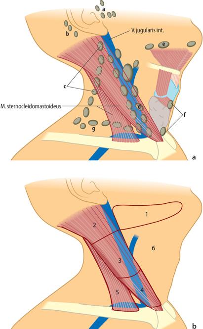 Anatomie   SpringerLink