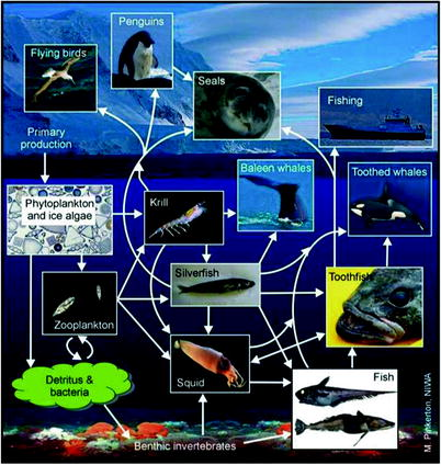 Polar Monitoring: Seabirds as Sentinels of Marine Ecosystems