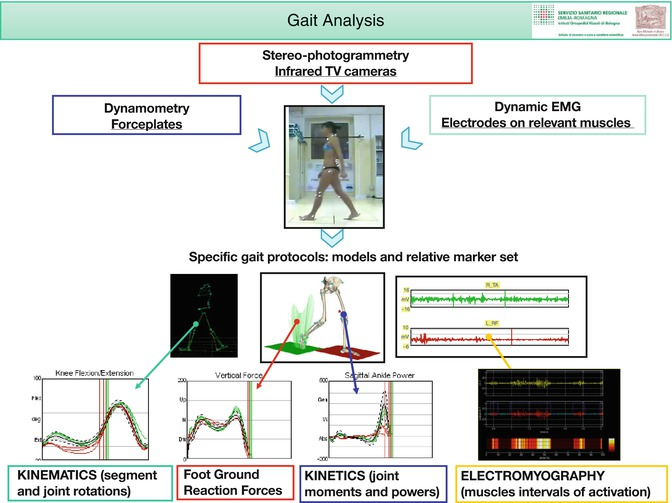 Gait analysis and the assessment of total knee replacement open image in new window fandeluxe Choice Image