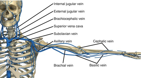 Subclavian Artery and Vein Injuries | SpringerLink