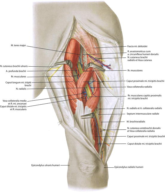 The Controversial Pain Syndrome of Proximal Radial Compression ...