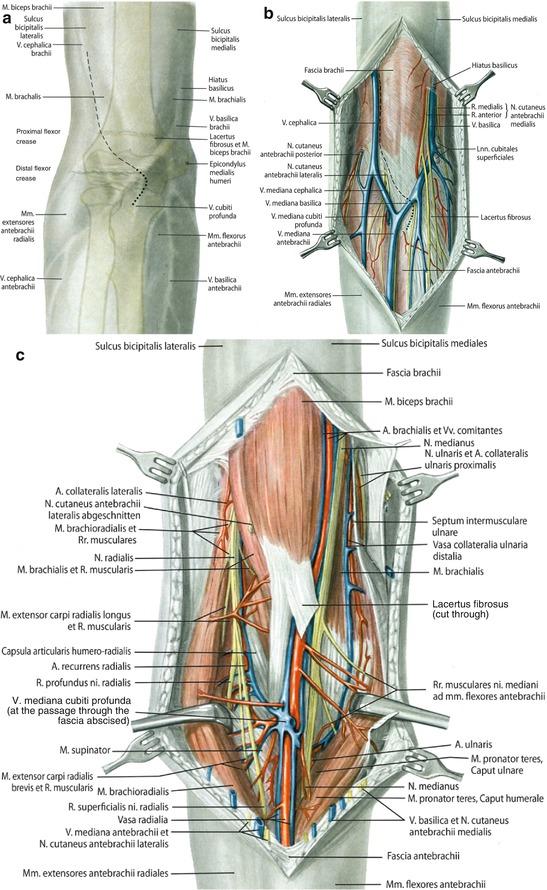 Wunderbar Anatomie Zur Intubation Ideen - Menschliche Anatomie ...