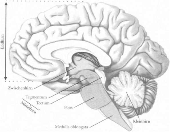 Biologische Psychologie – Naturwissenschaftliche Grundlagen ...
