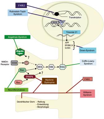 Verhaltens- und Neurogenetik | SpringerLink