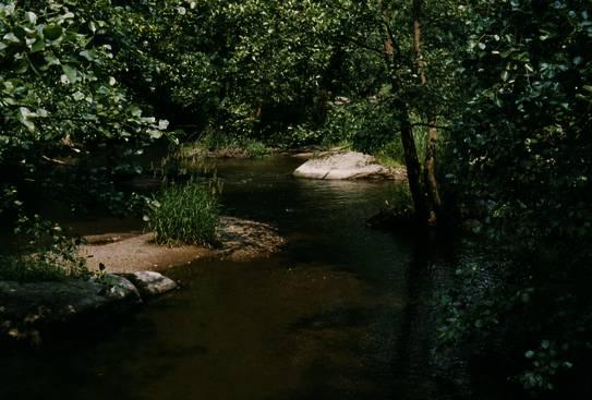 Planung der Fließgewässer- und Auenentwicklung | SpringerLink