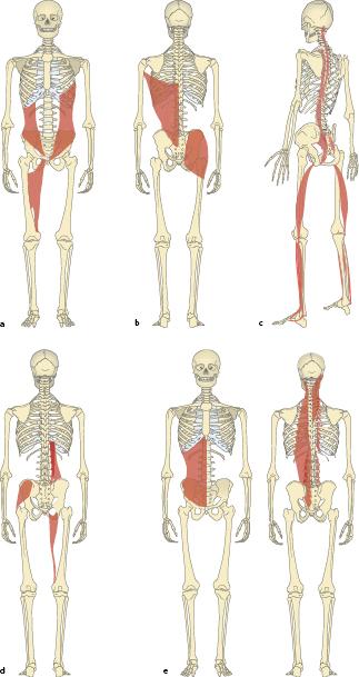 Pilates in der Prävention: Grundlagen | SpringerLink
