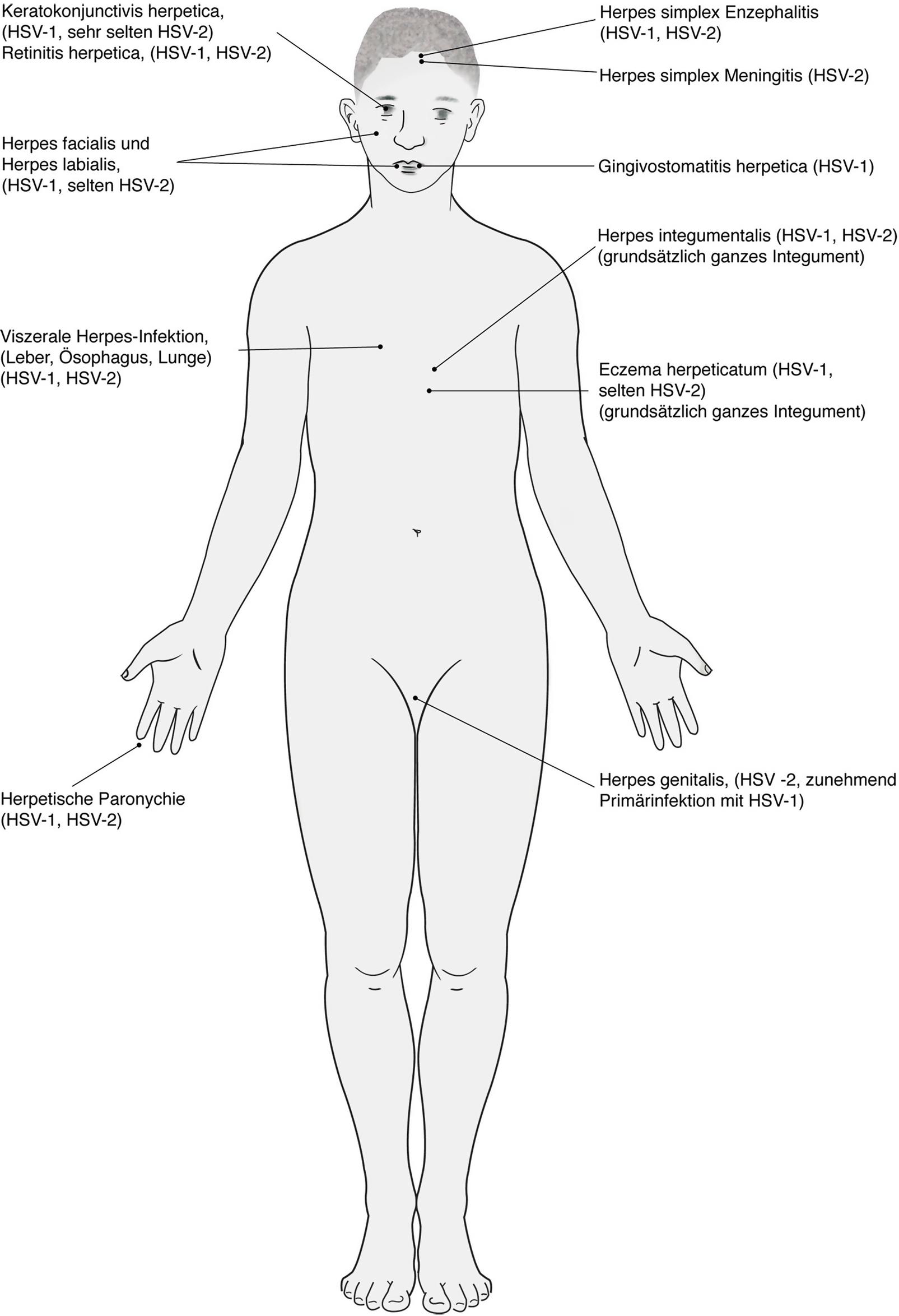 Schön Hirnhemisphäre Anatomie Bilder - Anatomie Ideen - finotti.info