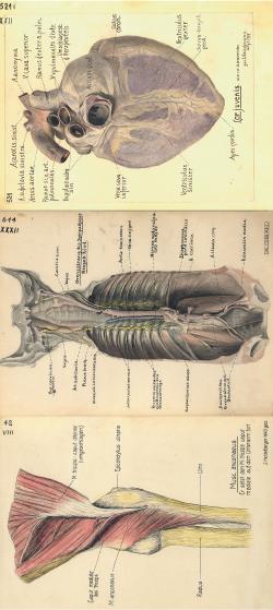 Mensch und Tier – Die Vergleichende Anatomie hält Einzug | SpringerLink