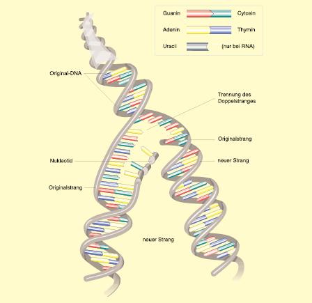 Entstehung und Biologie bösartiger Tumoren | SpringerLink