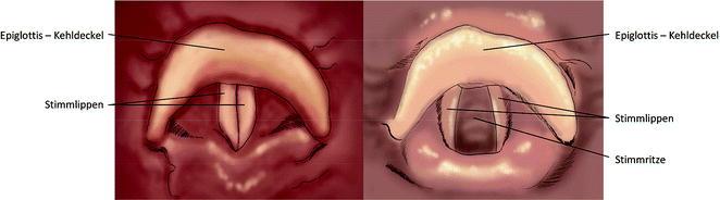 Anatomie und Physiologie der Atmung | SpringerLink