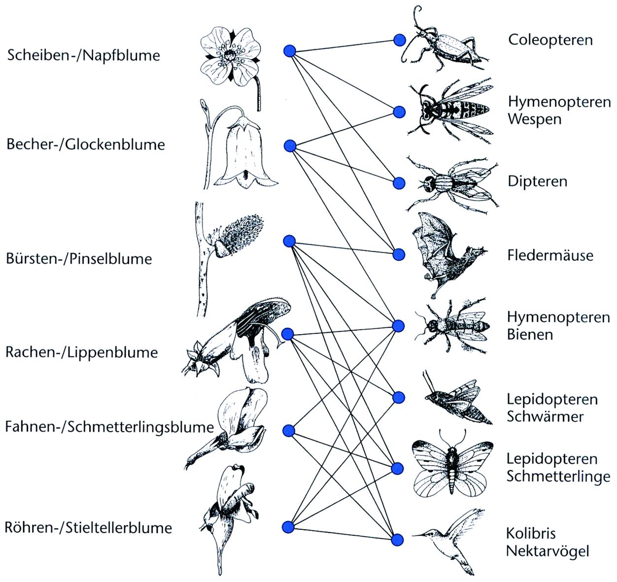 Ökologische Interaktionen | SpringerLink