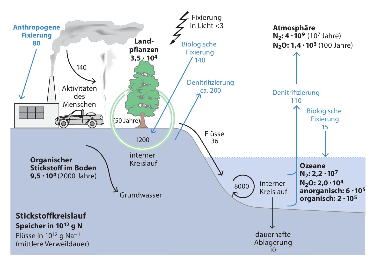 Pflanzen in Ökosystemen   SpringerLink