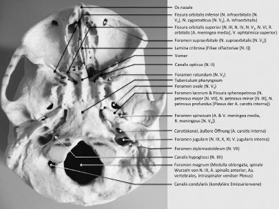 Klinische Anatomie der Schädelbasis | SpringerLink