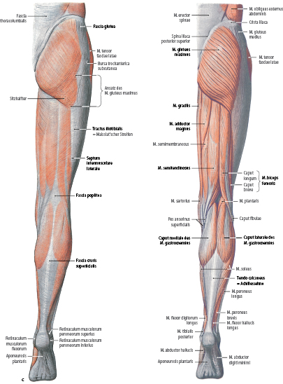 Funktionelle Anatomie und klinische Untersuchung | SpringerLink
