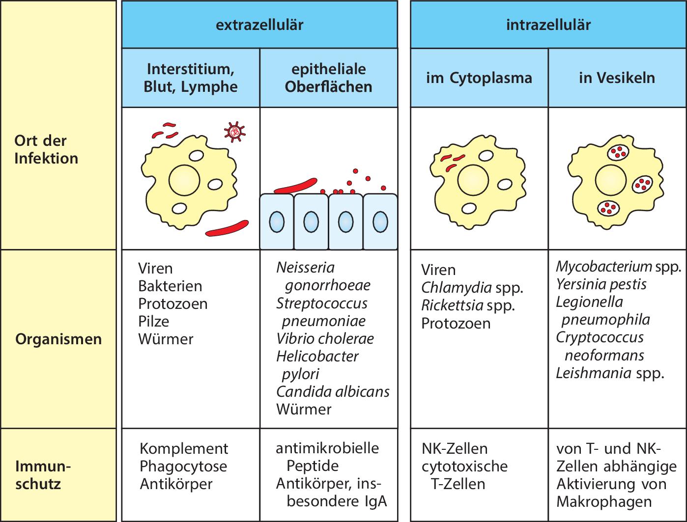 Die angeborene Immunität | SpringerLink