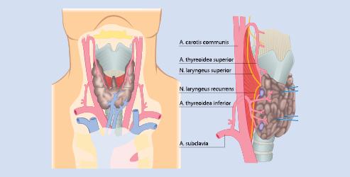 Allgemein- und Viszeralchirurgie   SpringerLink