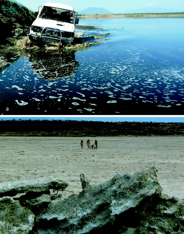 Gesichtspflege Sea Of Spa ~ Essential Totes Meer Behandlung Salz Seife ~ Tief Weltweit Schiff Rapid Heat Dissipation