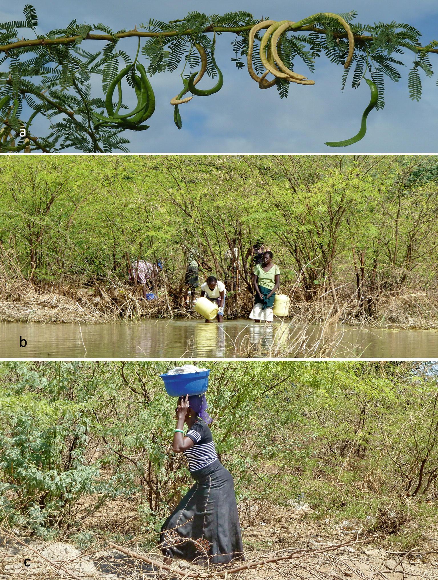 East Africa: Hub of the Unresting Lesser Flamingo   SpringerLink
