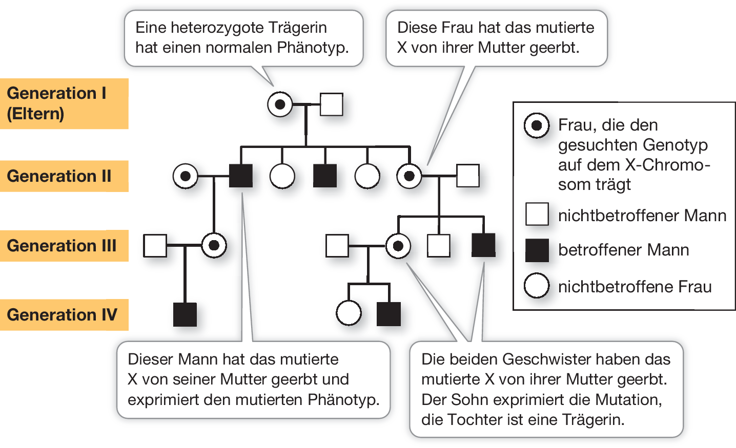 Vererbung, Gene und Chromosomen   SpringerLink