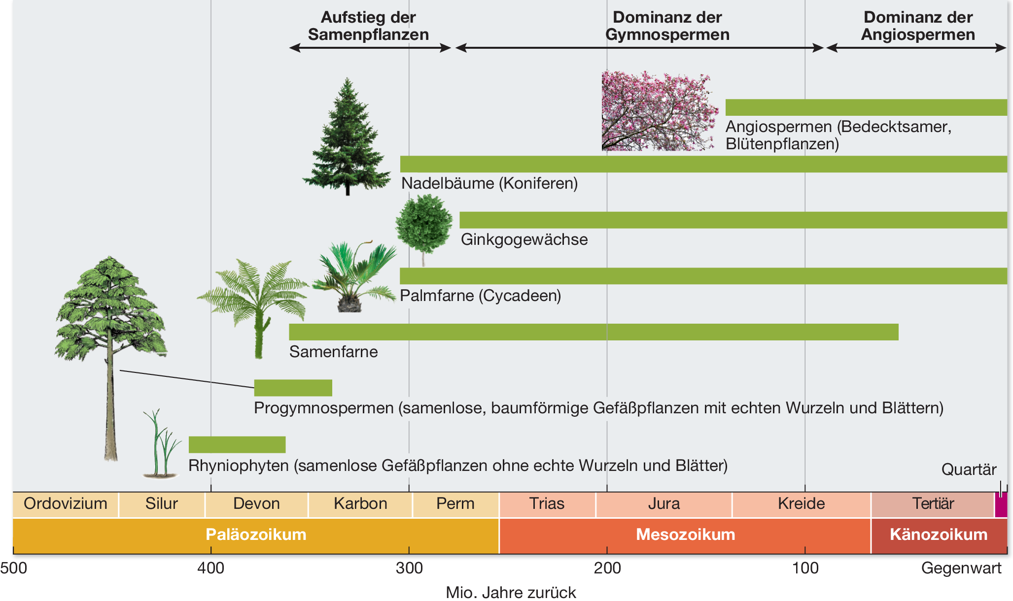 Mediendatenbank Biologie Merkmale Der Samenpflanzen